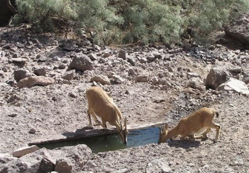 محیط زیست استان کرمان ، نیازمند حمایت